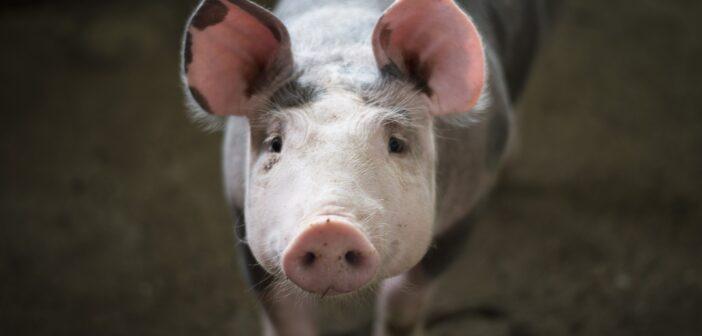 Русские хакеры атаковали мирового производителя мяса